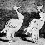 fadagály karikatúra _ULK című berlini élclapból 1883. Adalék a fajok eredetéhez_A turnűr származása.